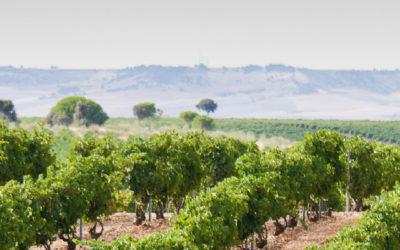 Espanja – Vinos Sanz