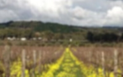 Australia – The Hedonist