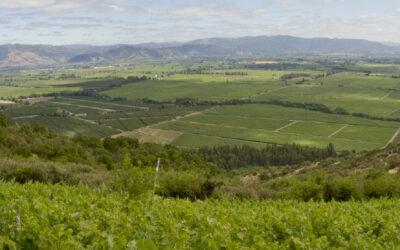 Chile – Viña Requingua