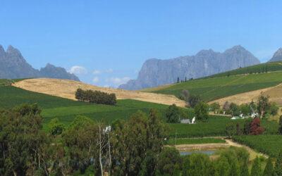 Etelä-Afrikka – Thembi Wines