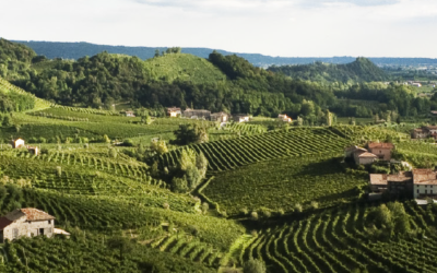 Italia – Azienda Agricola Rebuli