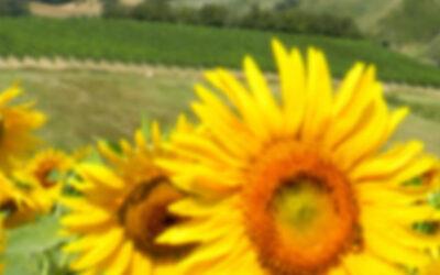 Italia – Duga di Saragnano