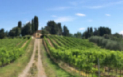 Italia – Poggio Nicchiaia
