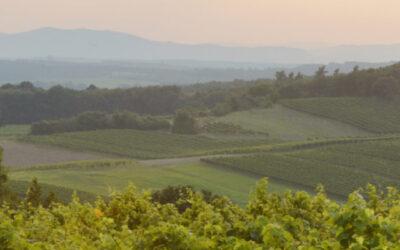 Itävalta – Weingut Netzl
