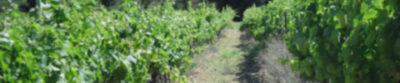 Vignerons du Sommierois