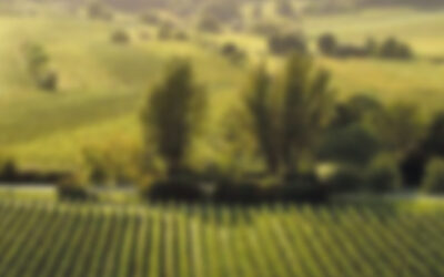 Saksa – Weingut Pflüger